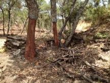 cork-trees-villacp