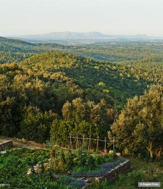 cp-eugenipons-forest-vegetablegarden-gavarres2020